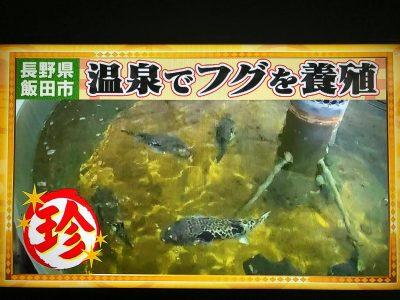 ナニコレ珍百景 トラフグ かぐらの湯 遠山 飯田焼肉