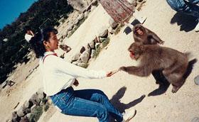 (Photo:山の中で今もサルと遊んでます!)