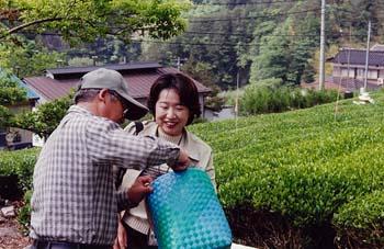 (Photo:お茶摘みツアーの添乗員)